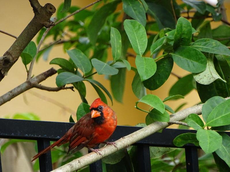 Feed Your Backyard Birds with the Best Cardinal Bird Feeder