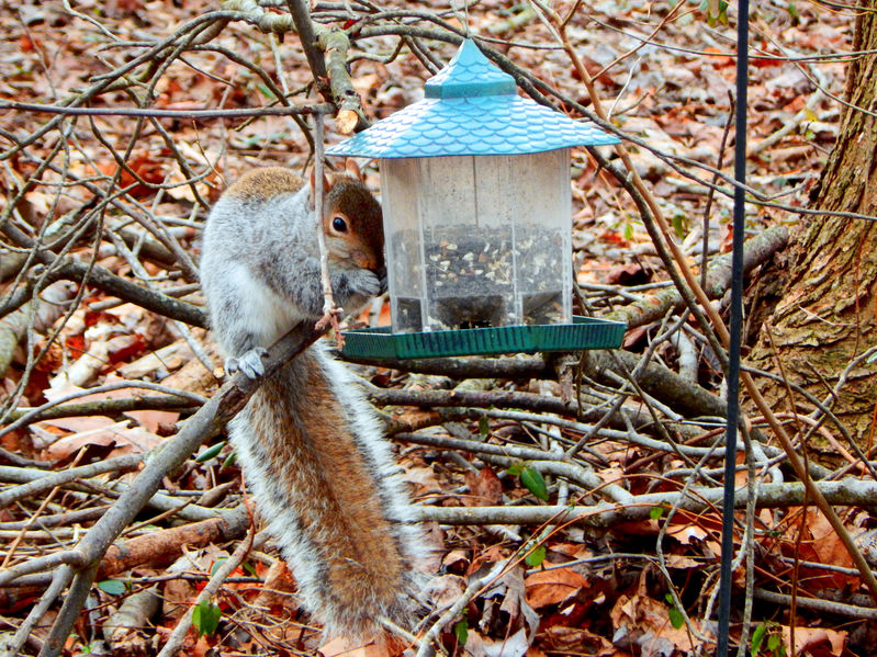 How To Keep Squirrels Out Of Bird Feeder