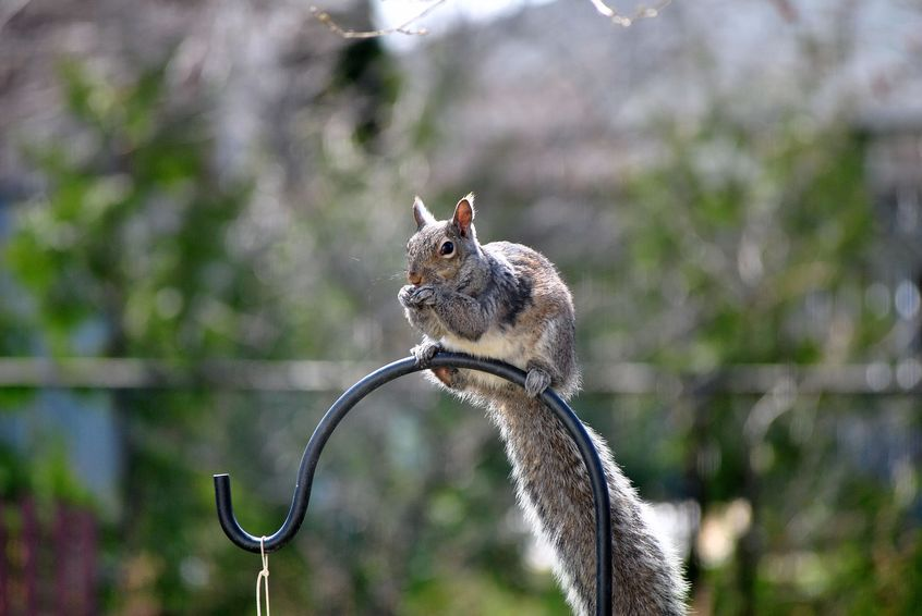 How to Stop Squirrels from Climbing Bird Feeder Poles